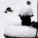 Birds look for food on a snowy winter day.