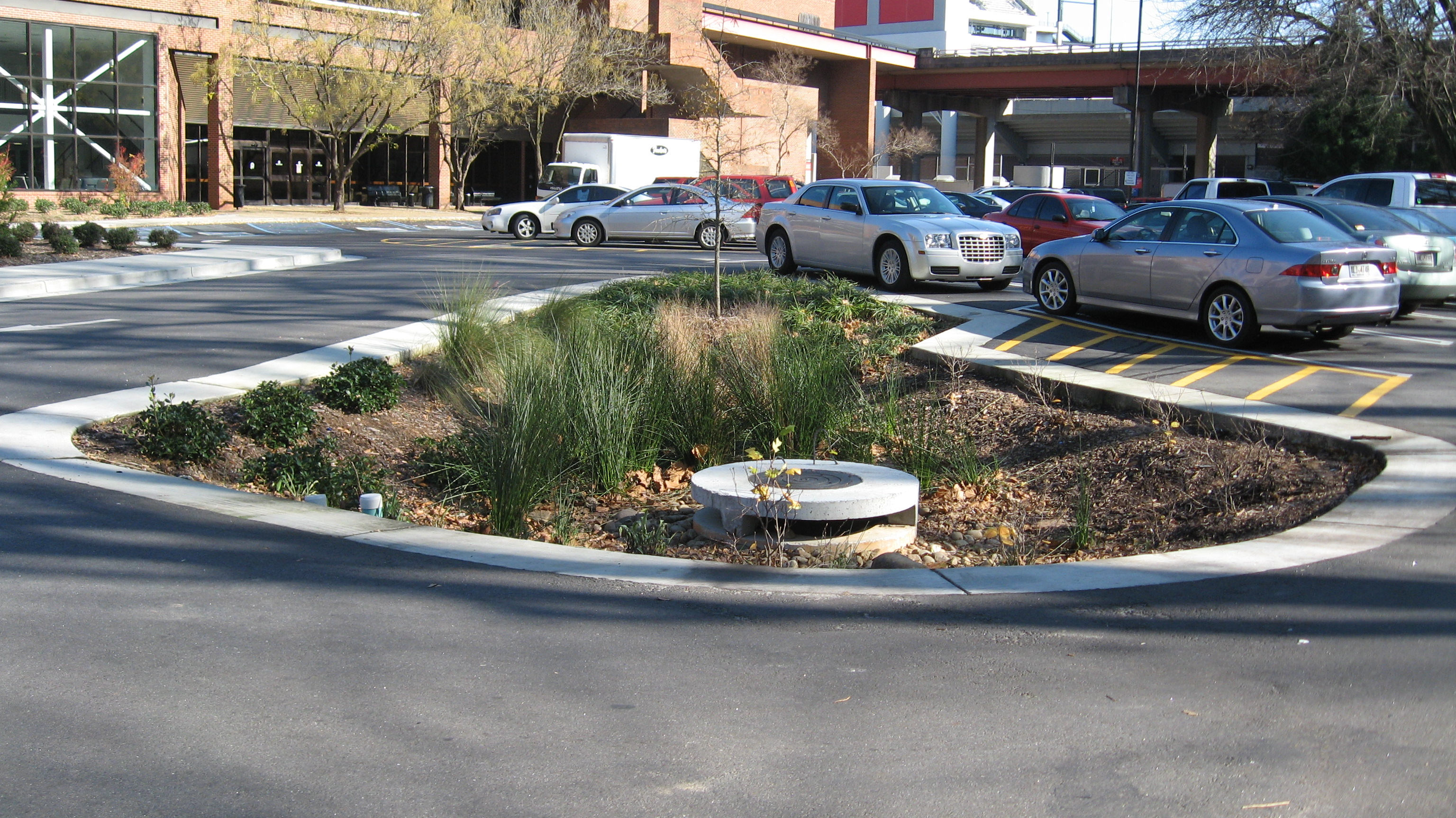 A rain garden installed in the parking lot at the Tate Student Center at the University of Georgia relies on runoff water to irrigate plant material.