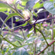 Stick insects are similar in appearance to the twigs upon which they rest, allowing them to hide and avoid predators.