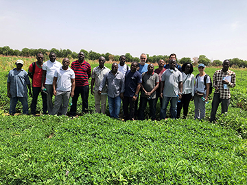 Peanut breeders from across Africa, working with a team of genomics experts, recently met in Senegal to review research into the genotypes of lines grown across the continent. By understanding the genetic diversity of peanut grown in Africa, the breeders can select lines for certain desirable traits, such as climate resiliency.