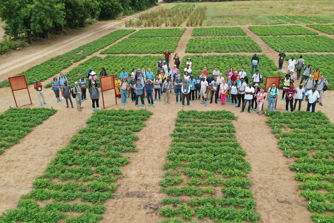 African peanut breeders stand in a field in Senegal in 2018, where seeds are replicated for a project to map the genetic diversity of lines grown on the continent. Working with the Feed the Future Peanut Innovation Lab headquartered at the University of Georgia, scientists genotyped hundreds of lines of peanuts grown across Africa.