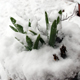 Cold can hurt your plants - and while snow isn't so much of a concern, heavy ice is.