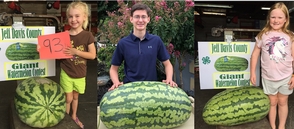 With a watermelon weighing in at 135 pounds, Jordan Smothers of Walton County won the 2019 Georgia 4-H Watermelon Growing Contest.