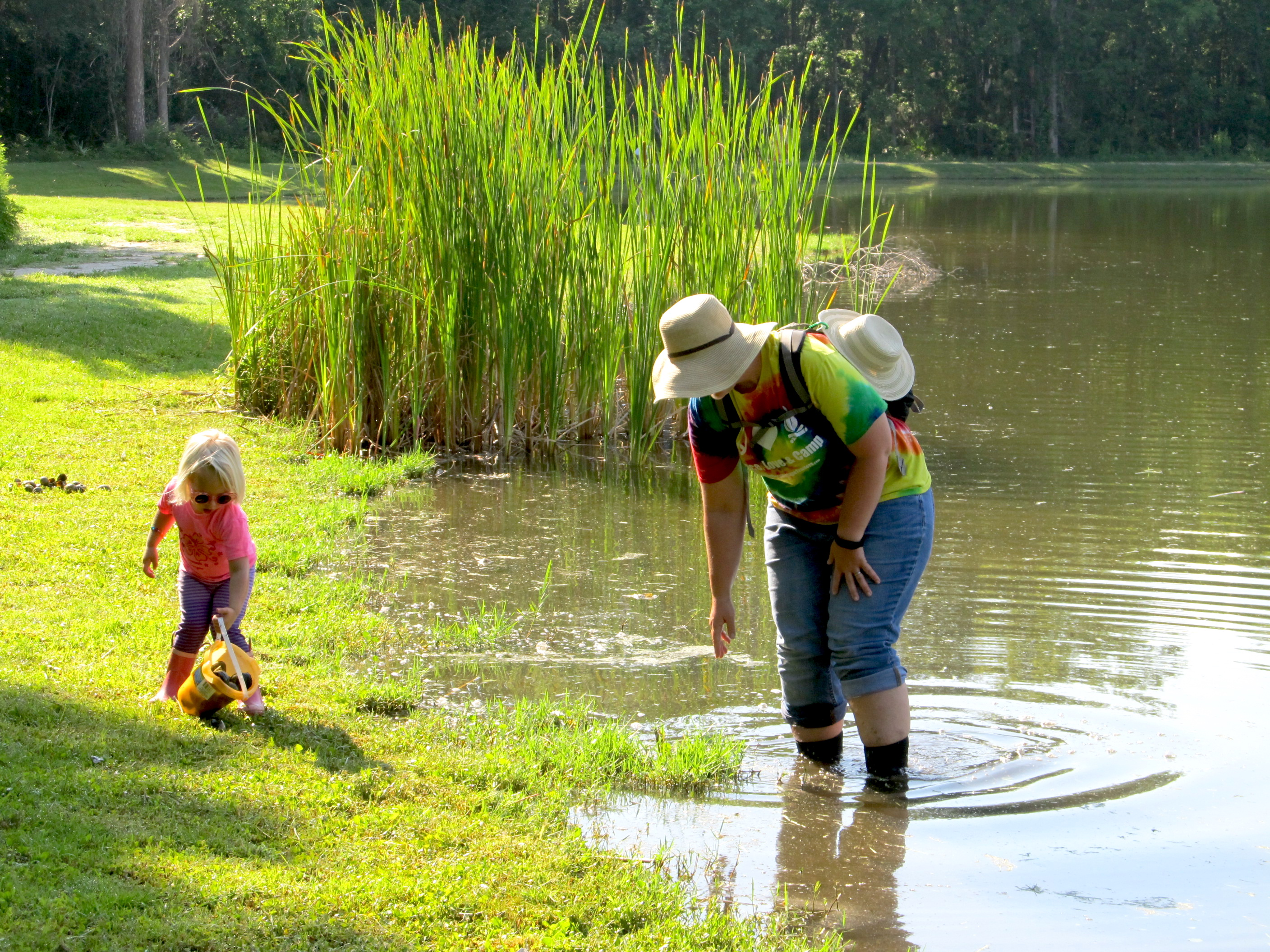 For the past four years, Camden County Extension has hosted island apple snail removal days in partnership with the Georgia Department of Natural Resources. To date, volunteers like Beth Walker and her daughter Lucy have removed 228 gallons of island apple snails and innumerable egg masses.