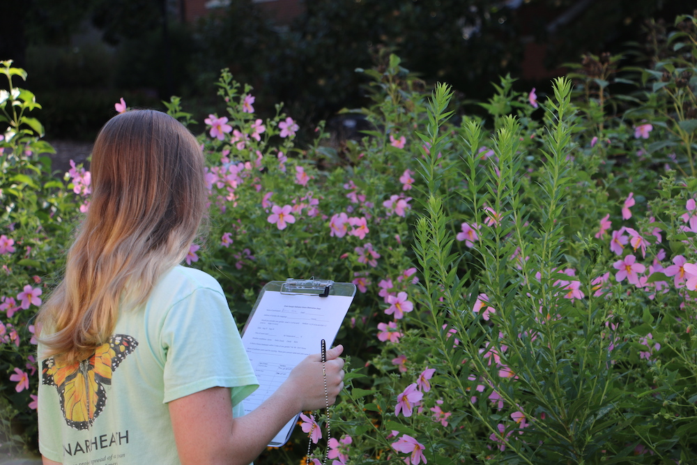 A UGA student participates in UGA Extension's inaugural Great Georgia Pollinator Census on Aug. 23, 2019.