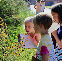 Second-grade students at Colham Ferry Elementary School in Oconee County work to stay focused on their plants during UGA Extension's inaugural Great Georgia Pollinator Census on Aug. 23, 2019.
