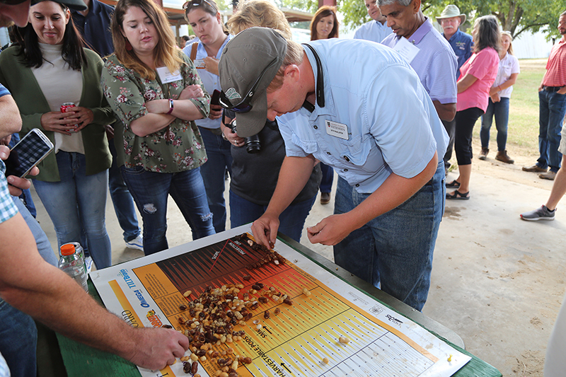 Terrell County Extension Agriculture and Natural Resources Agent Seth McAllister sorts peanuts out on a maturity board during the Georgia Peanut Tour on Sept. 19, 2019.