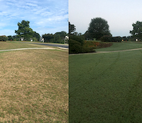 Insufficient production and storage of photosynthates during the fall transition into dormancy can translate to issues during spring green-up. Drought-stressed turfgrass in August 2016 (left) was able to recover prior to dormancy following appreciable rainfall in September (right). Much of Georgia's turfgrass is currently drought-stressed, and the transition to dormancy is quickly approaching.