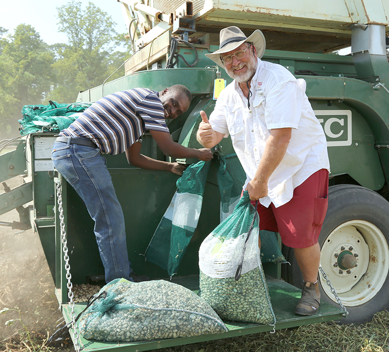 UGA scientists Glen Harris and Henry Sintim bag harvested peanuts on Oct. 1 at the plant sciences farm on the UGA Tifton campus.