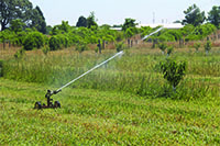 Irrigation is at work in a peach orchard in this 2016 photo on the UGA Griffin campus.
