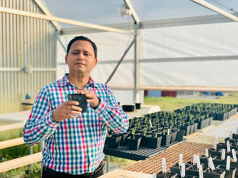 Bhabesh Dutta examines an onion plant in a greenhouse.