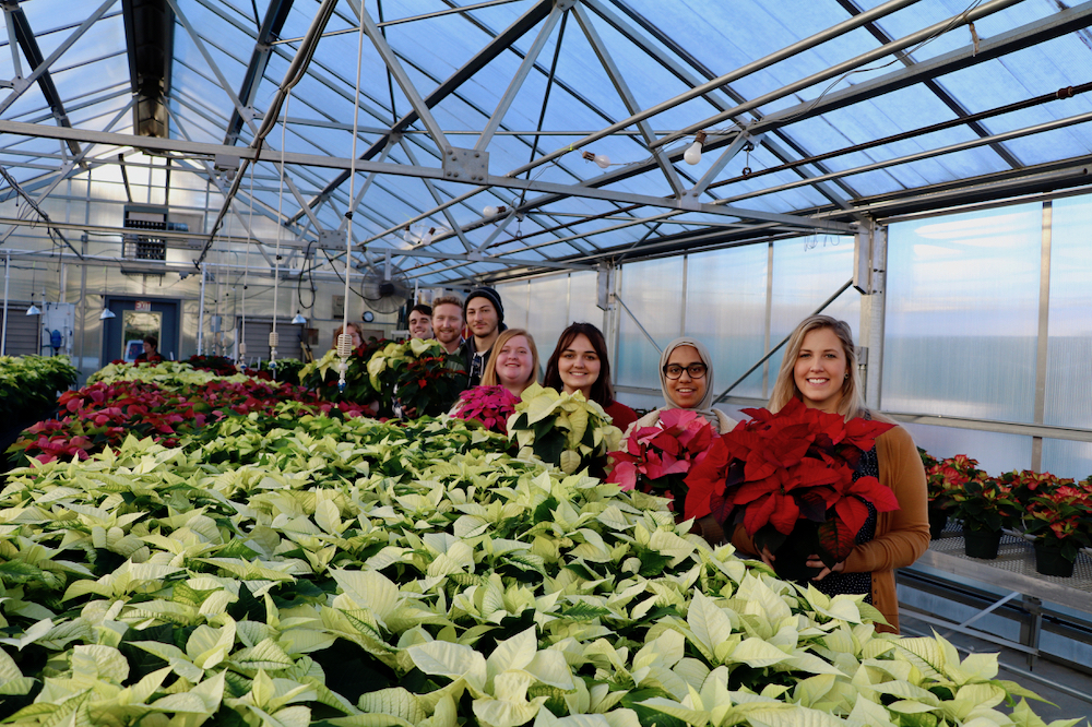 Members of UGA's Tau chapter of Pi Alpha Xi Horticultural Honor Society will host their annual poinsettia sale on Dec. 7 from 8 am. to 4 p.m. at Greenhouse 13 at the UGA Riverbend Greenhouse at 111 Riverbend Road.
