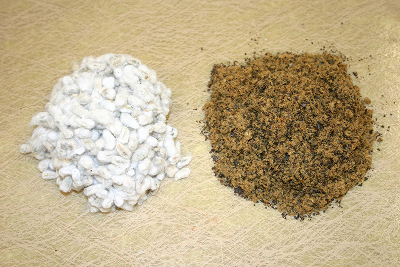 Cottonseed is not only more readily available to Georgia farmers, it is also less expensive. Pictured is cotton seed and cotton cake.