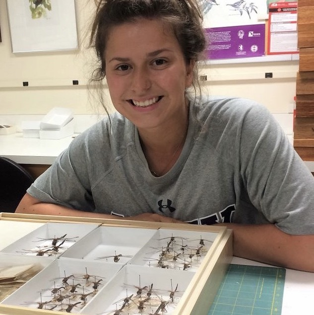 With the help of the Ratcliffe Scholarship, entomology student Sarah Yount will spend her summer working at the Smithsonian Institute's National History Museum in Washington, D.C.