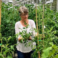 UGA horticulture researcher Esther van de Knaap is part of a research group that sequenced and compared the genomes of 100 different varieties of tomato to detect and study how gene variants affect crop traits.