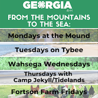 Each weekday afternoon, a different Georgia 4-H center uploads or live streams an environmental education lesson. Lessons will cover a range of topics such as herpetology, entomology, and beach or stream ecology.