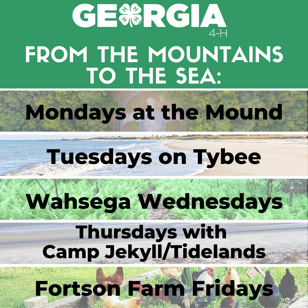 """From the Mountains to the Sea"" is an online, environmental education series with lessons from the Georgia 4-H centers."