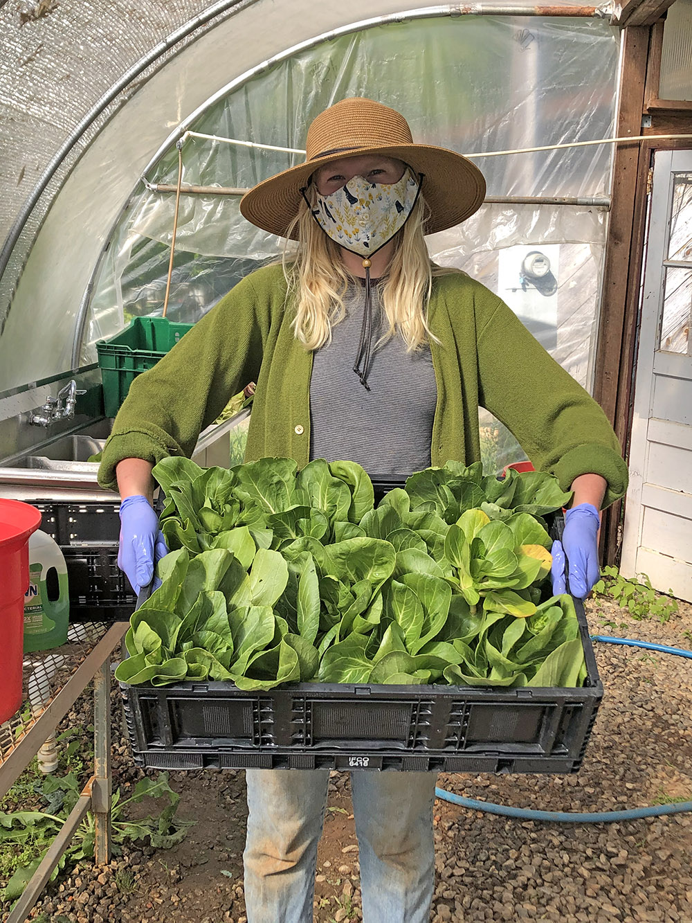 UGArden Farm Manager JoHannah Biang practices safety guidelines imposed due to the COVID-19 crisis while harvesting greens for distribution to food insecure families in the Athens, Georgia, area.