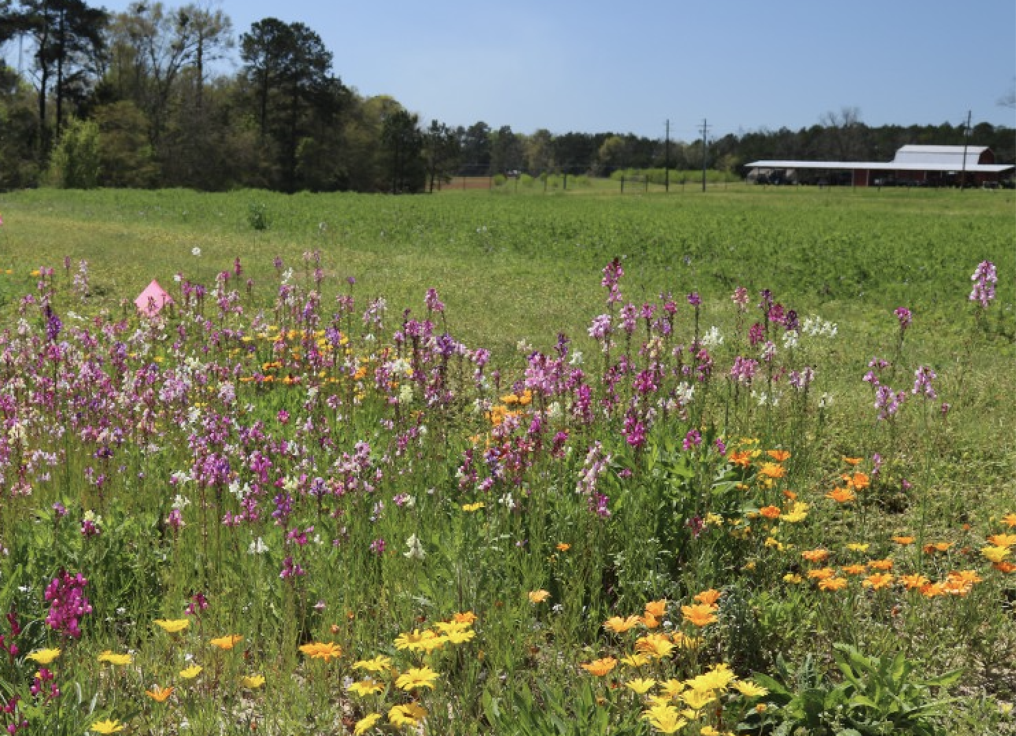Native wildflowers grow in field margins.
