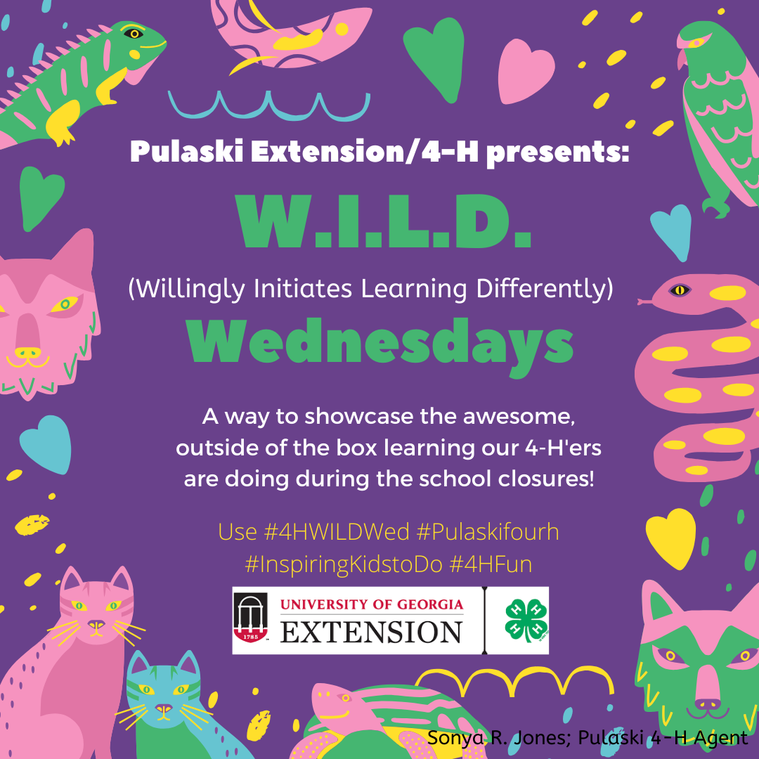 Pulaski County 4-H online lessons on Wednesdays focus on innovative learning.