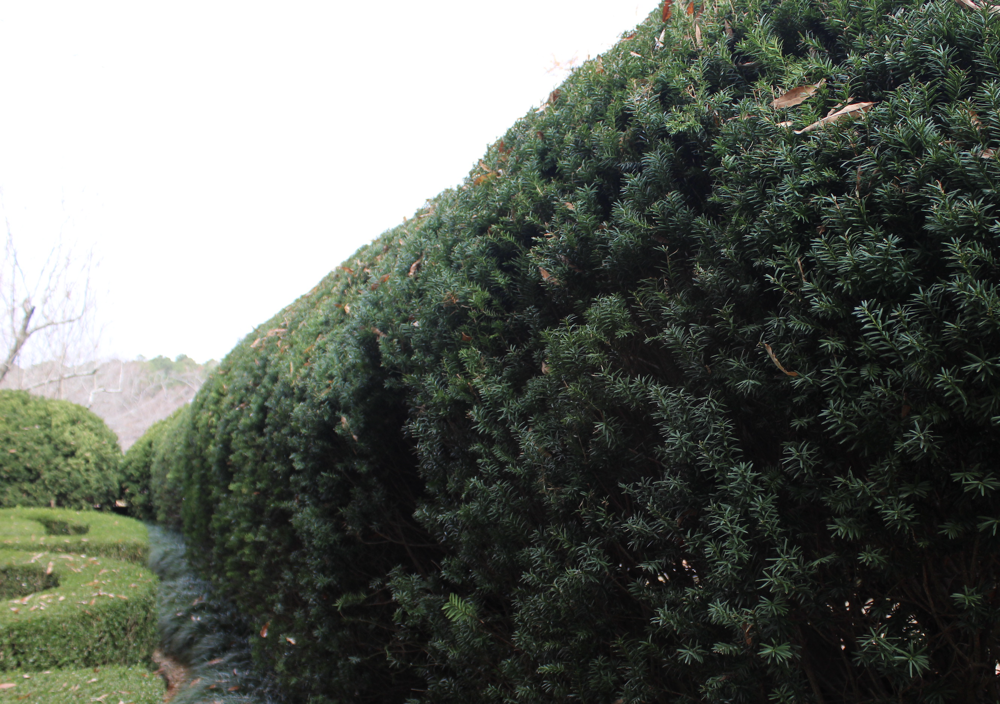 Hedges, like the Taxus baccata (yew) pictured at Hills and Dales Estate in LaGrange, Georgia, can shape and frame a view, divide spaces in a landscape and provide privacy.
