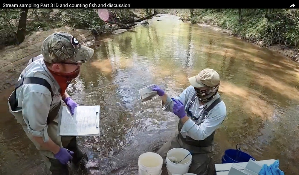 "UGA faculty Nick Fuhrman and James Shelton perform stream fish sampling for their ""Natural Resource Management for Teachers"" lab."