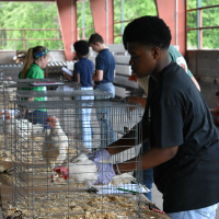Eighty Georgia 4-H youth participated in the first virtual state poultry judging contest.