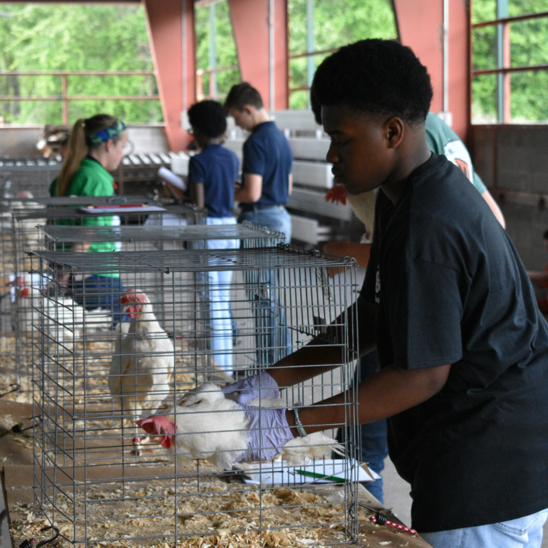 Georgia 4-H Poultry Judging