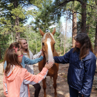 More than 50 youth participate in virtual Georgia 4-H state horse educational competition.