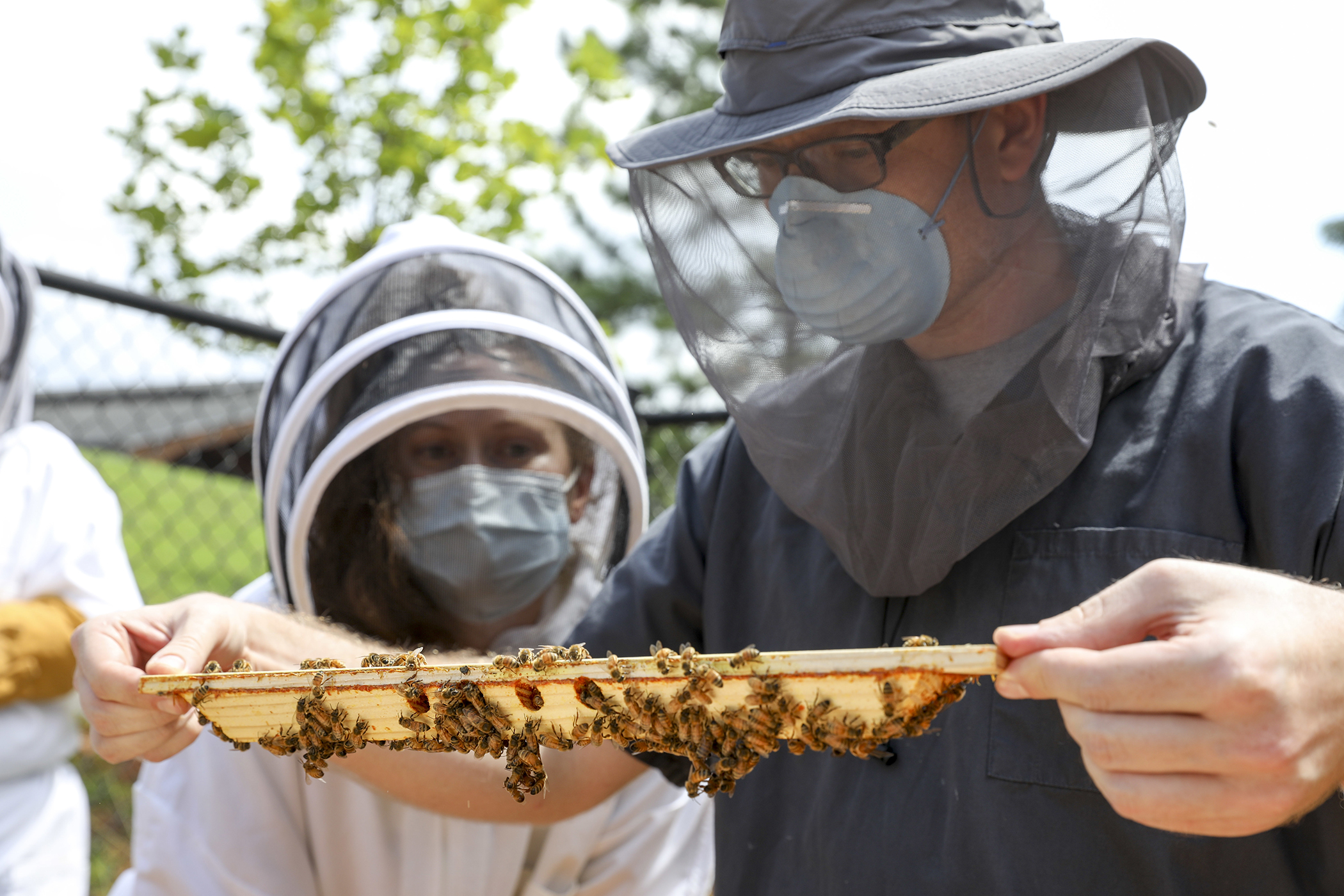 College of Veterinary Medicine residents Dr. Megan Partyka and Dr. Gregory Walth inspect a beehive frame. (Photo by Dorothy Kozlowski/UGA)