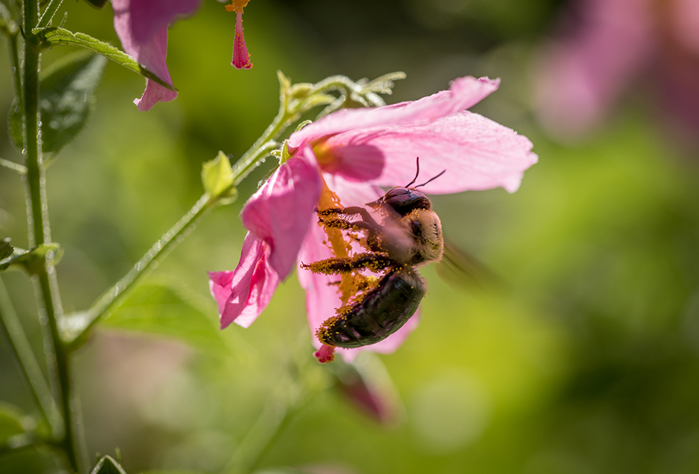 Citizen scientists around the state can help keep track of pollinator health in Georgia by participating in the second Great Georgia Pollinator Census Aug. 21 and 22.