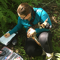 A fawn lies calmly in Miranda Hopper's arms during an examination in the wild. Face coverings help fawns stay relaxed while data are taken, including their weight and length. They are also fitted with a GPS collar to track them over the next several months and tags are put in their ears.