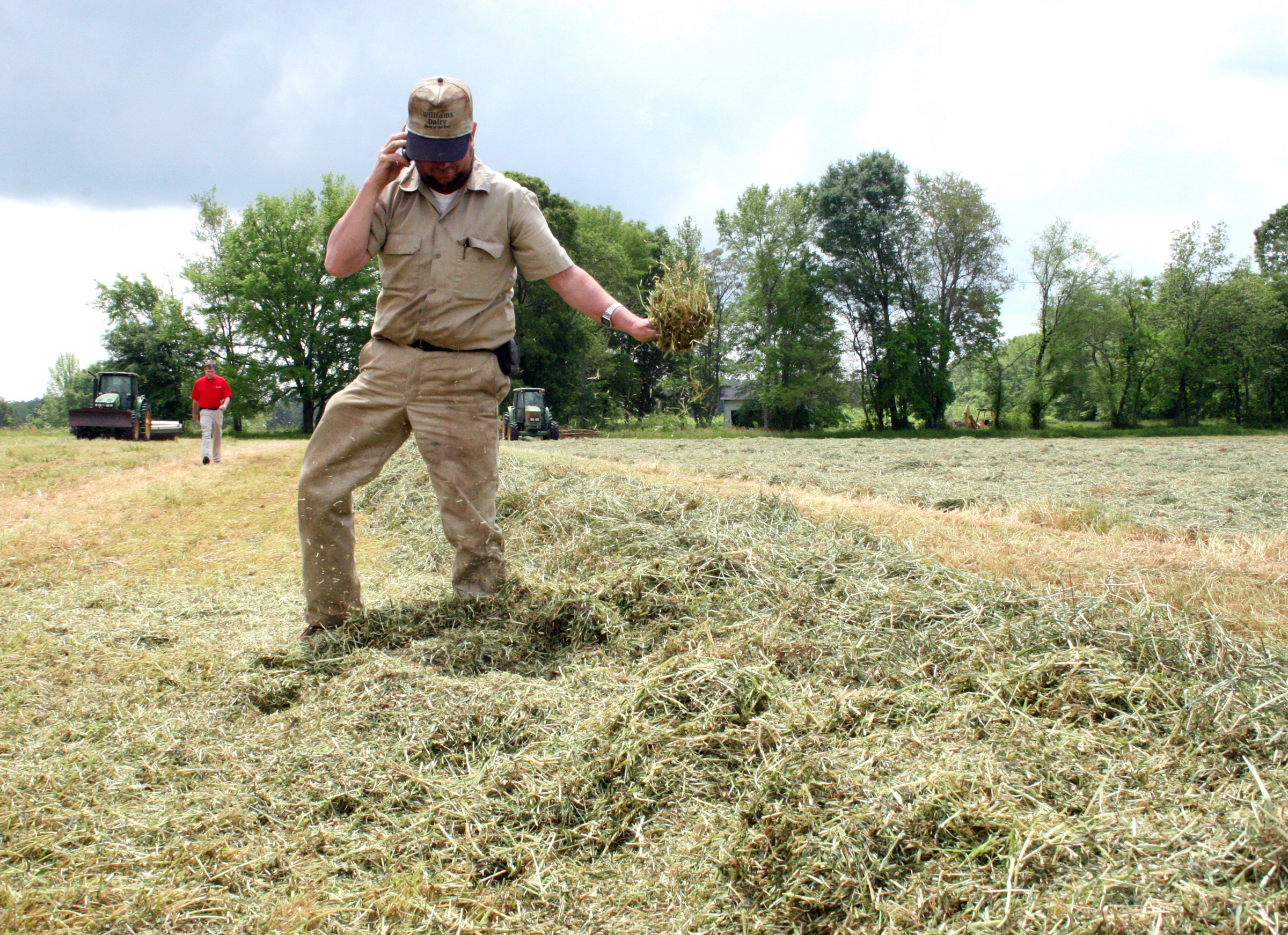 Everett Williams, center, checks the moisture level in just-cut rye grass on his dairy in Madison, Ga.