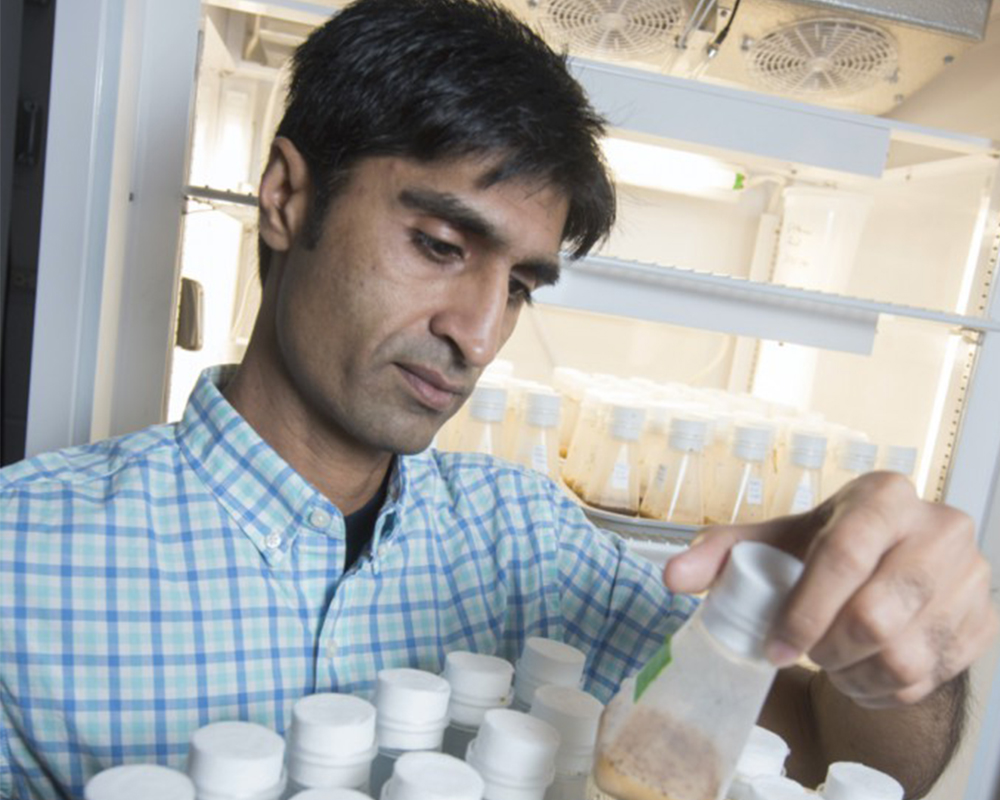 Ashfaq Sial is leading a multistate team of researchers to develop and implement long-term sustainable strategies to control spotted wing drosophila.