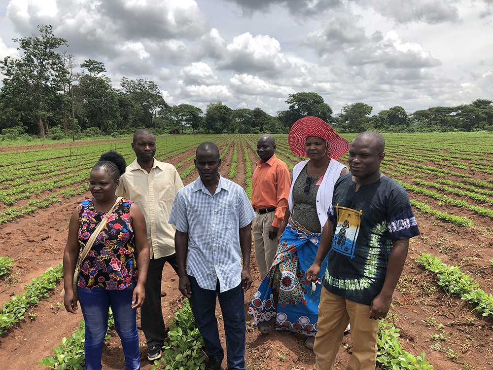 Justus Chintu (far right), the principal agricultural research scientist for groundnut breeding, and the rest of the team at the Chitedze Research Station near Lilongwe, gained approval for three new varieties after testing for resilience and market acceptability. (Photo by Jamie Rhoads)