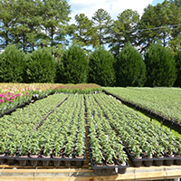 Plants grown in biodegradable pots at Mobley Plant Farm in Dacula, Georgia.