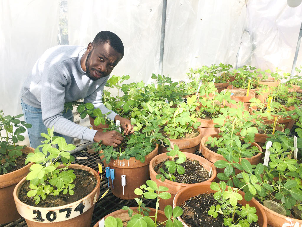 """Leslie Commey, a graduate student at Kwame Nkrumah University of Science and Technology (KNUST) in Kumasi, Ghana, studies at Texas Tech University and works with Venugopal Mendu, the lead scientist on the """"Developing Aspergillus flavus-resistant peanut using seed coat biochemical markers"""" project. (Photo courtesy of Leslie Commey)"""