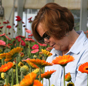 University of Georgia research technician Sherrie Stevens inspects Gerbera daisies for leaf miner damage.