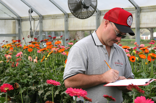 University of Georgia research coordinator Jim Quick records leaf miner numbers at a greenhouse.