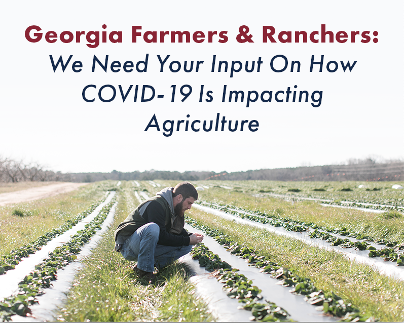 The Georgia Foundation for Agriculture, Georgia Farm Bureau, Georgia Department of Agriculture and UGA Center for Agribusiness and Economic Development are jointly sponsoring a second survey to document the impact of COVID-19 on the agriculture industry in the state. (photo from Georgia Farm Bureau)