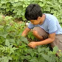 A 4S student from Jose Cecilio del Valle School in Honduras works in his home garden planted during the Honduras 4S From Home program.