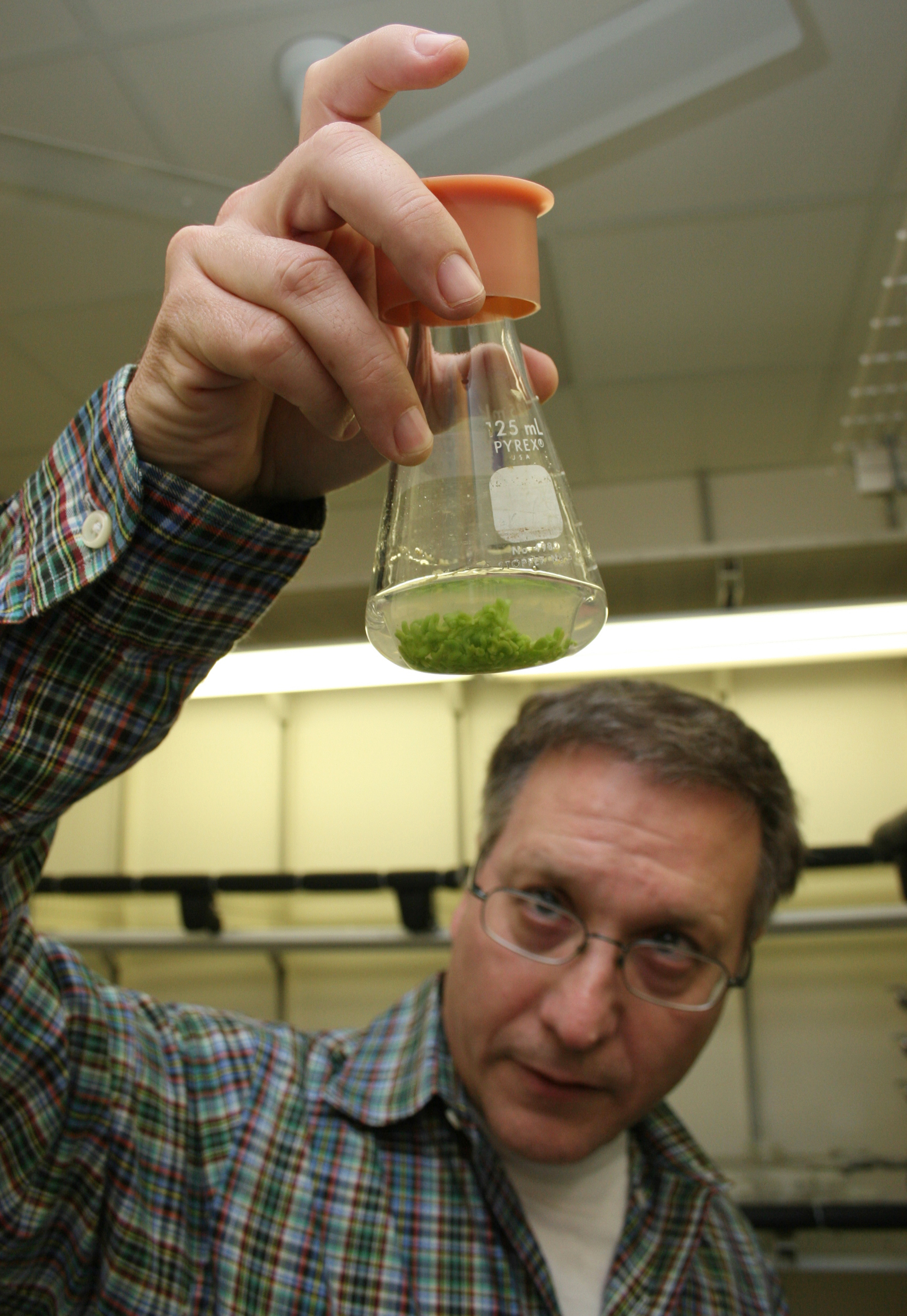 Wayne Parrott, a crop and soil sciences professor at the University of Georgia College of Agricultural and Environmental Sciences, checks out the growth of a few of his soybean plants.