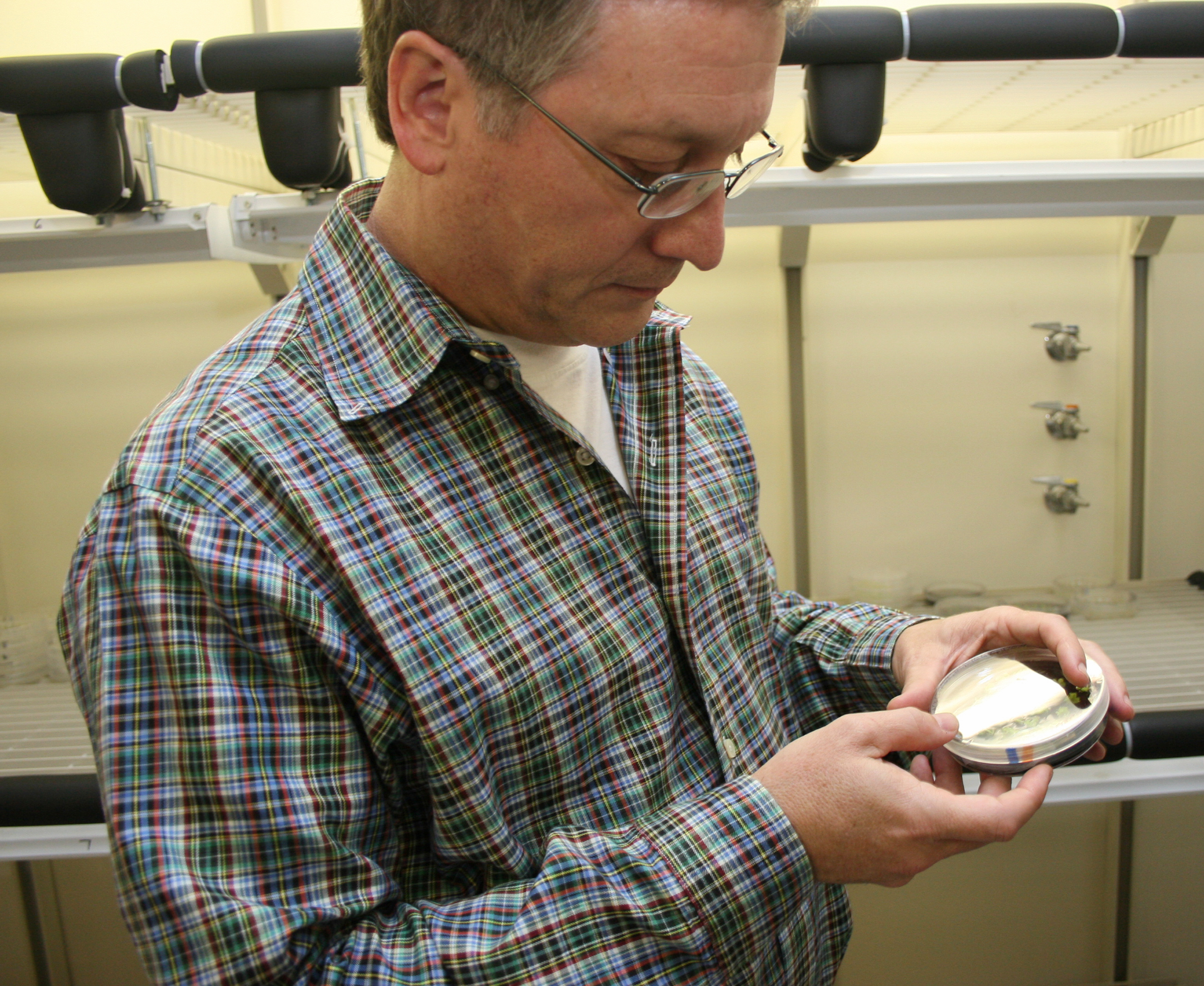 Wayne Parrott, a crop and soil sciences professor at the University of Georgia College of Agricultural and Environmental Sciences, examines an agar plate with just-formed soybean plants.