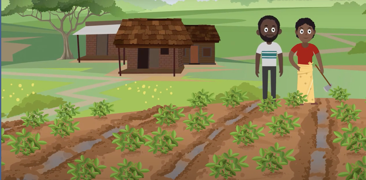 The Feed the Future Innovation Lab for Peanut at the University of Georgia worked with Scientific Animations Without Borders (SAWBO) to create the first of two animations covering good production practices in Malawi.