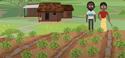 The Feed the Future Peanut Innovation Lab headquartered at the University of Georgia worked with Scientific Animations Without Borders to Create the first of two animations to show good production practices for peanut in Africa.