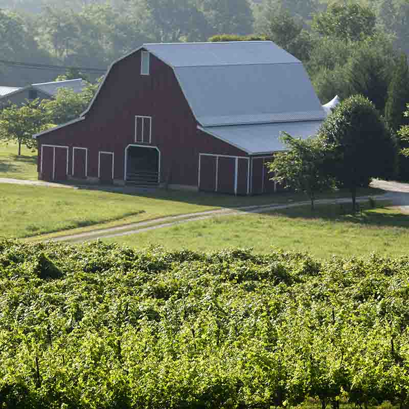 Agritourism has been steadily growing in Georgia over the past decade, and a new consumer survey by UGA economists shows that rural travel and agritourism is expected to rise in 2021, rebounding quicker than urban markets. (file photo)