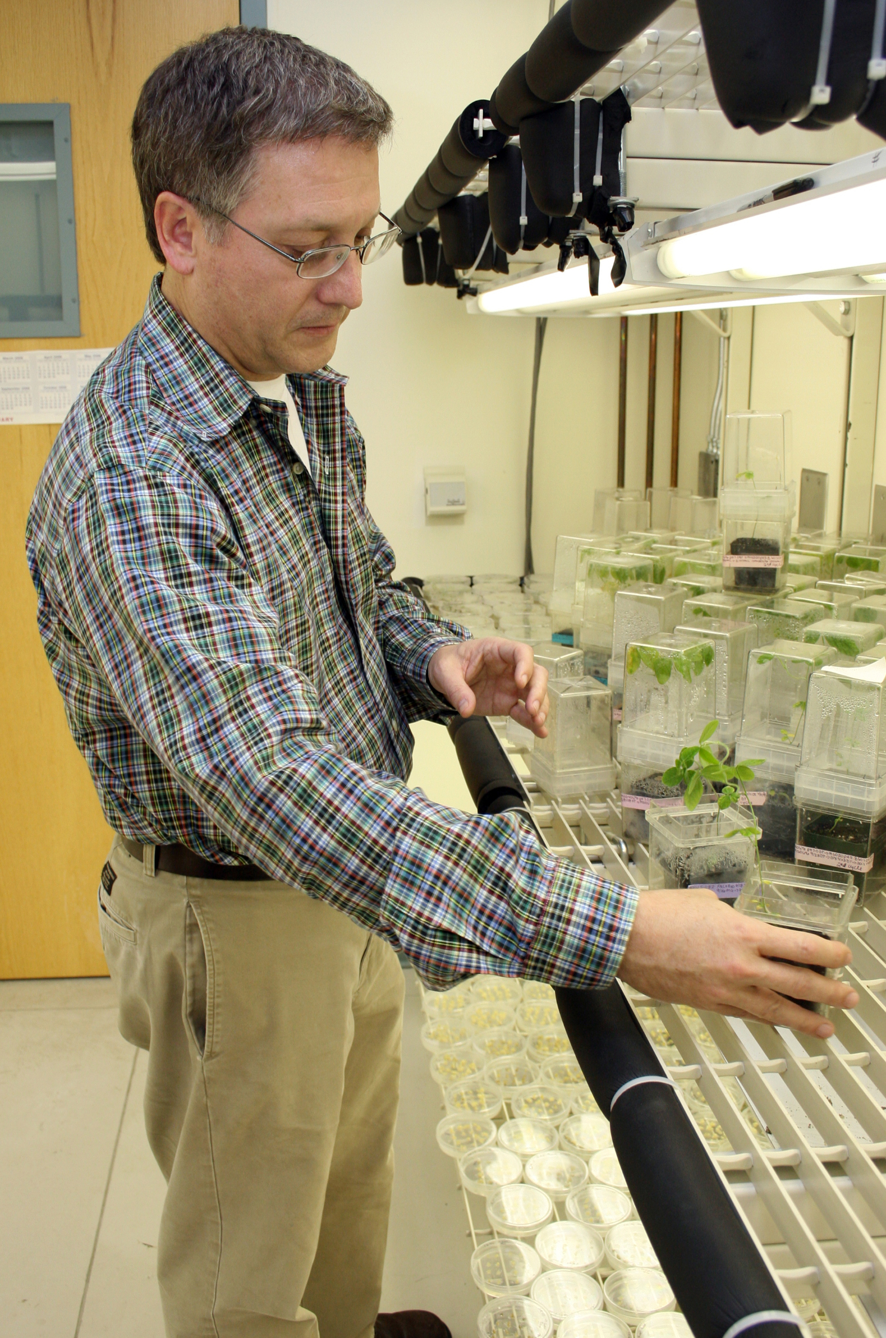 Soybean plants flourish under the grow lights in Wayne Parrott's lab. Parrott is a crop and soil sciences professor at the University of Georgia College of Agricultural and Environmental Sciences.