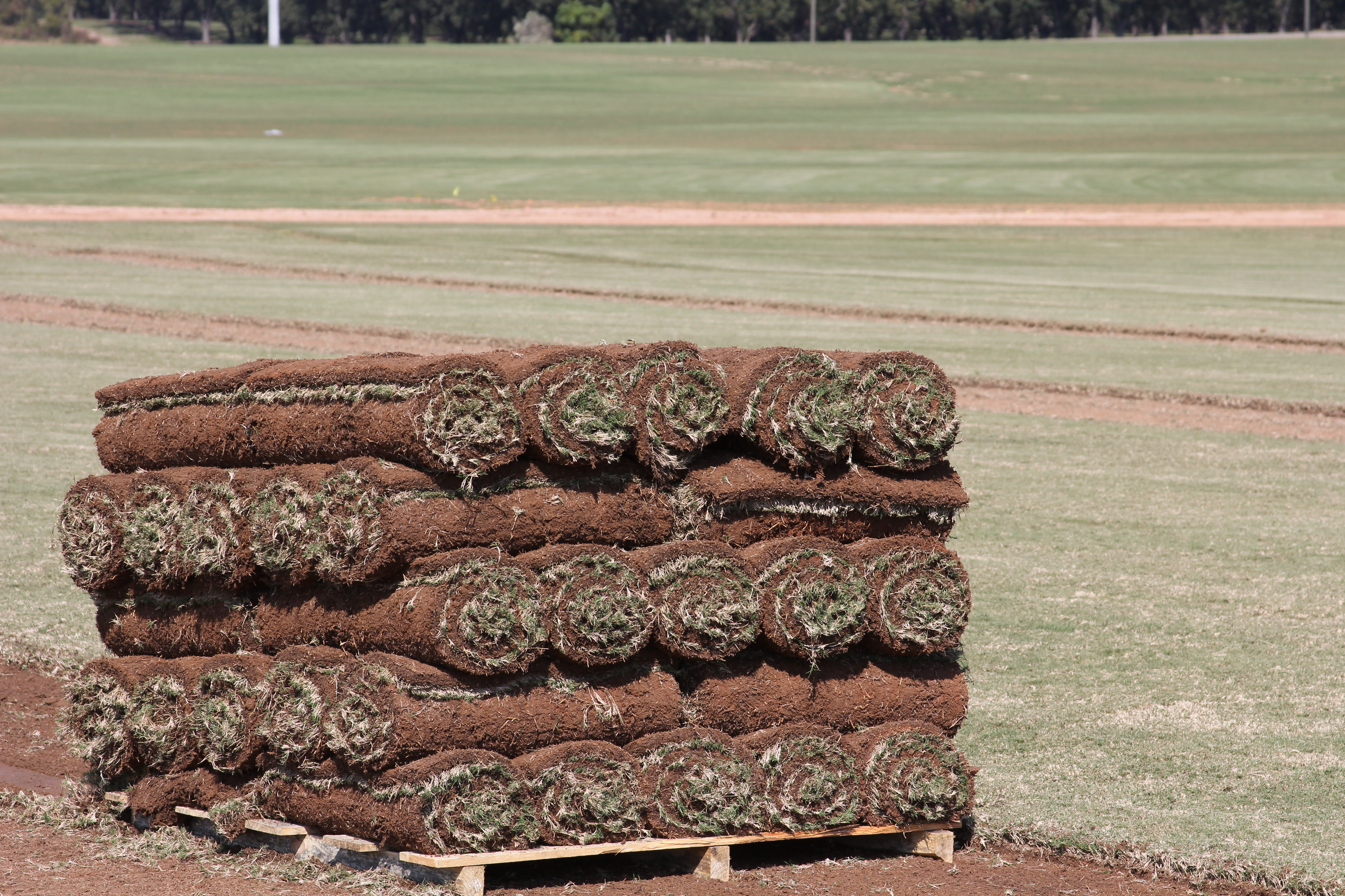 Price increases for sod this year could range from 2-8% over 2019 prices, according to a new survey of producers by UGA and the Georgia Urban Ag Council.