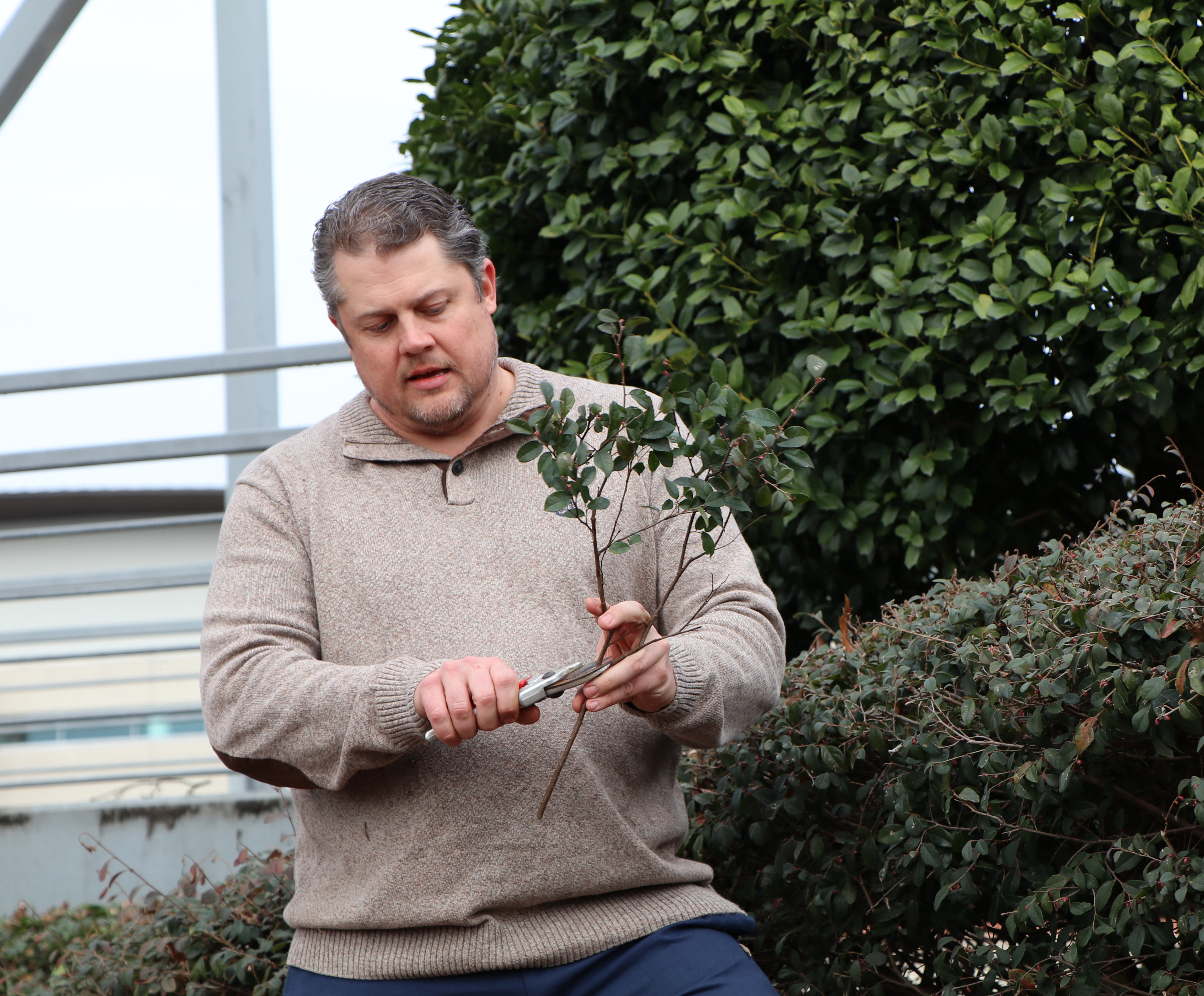 UGA horticulture Professor Matt Chappell demonstrated proper pruning technique at a green industry event in January 2020.