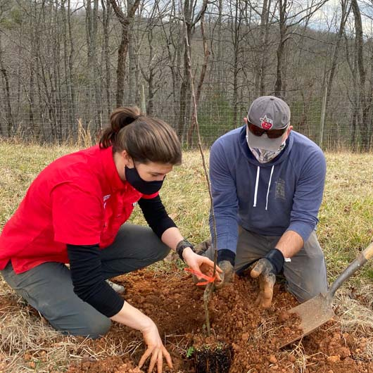 UGA Extension agents (left to right) Ashley Hoppers, Josh Fuder and Clark MacAllister plant one of the Heritage Orchard's trees. They located many of the orchard's varieties through their contacts with local apple growers and other farmers and tree owners. (Photo by Mike Terrazas)